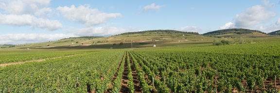 Panorama of the Wine of Beaune, Bourgogne