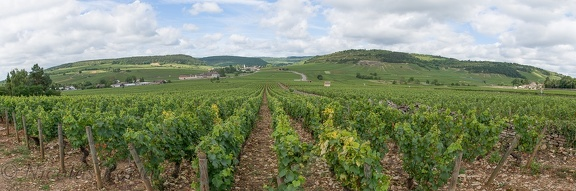 Panorama of the Wine of Meursault, Bourgogne